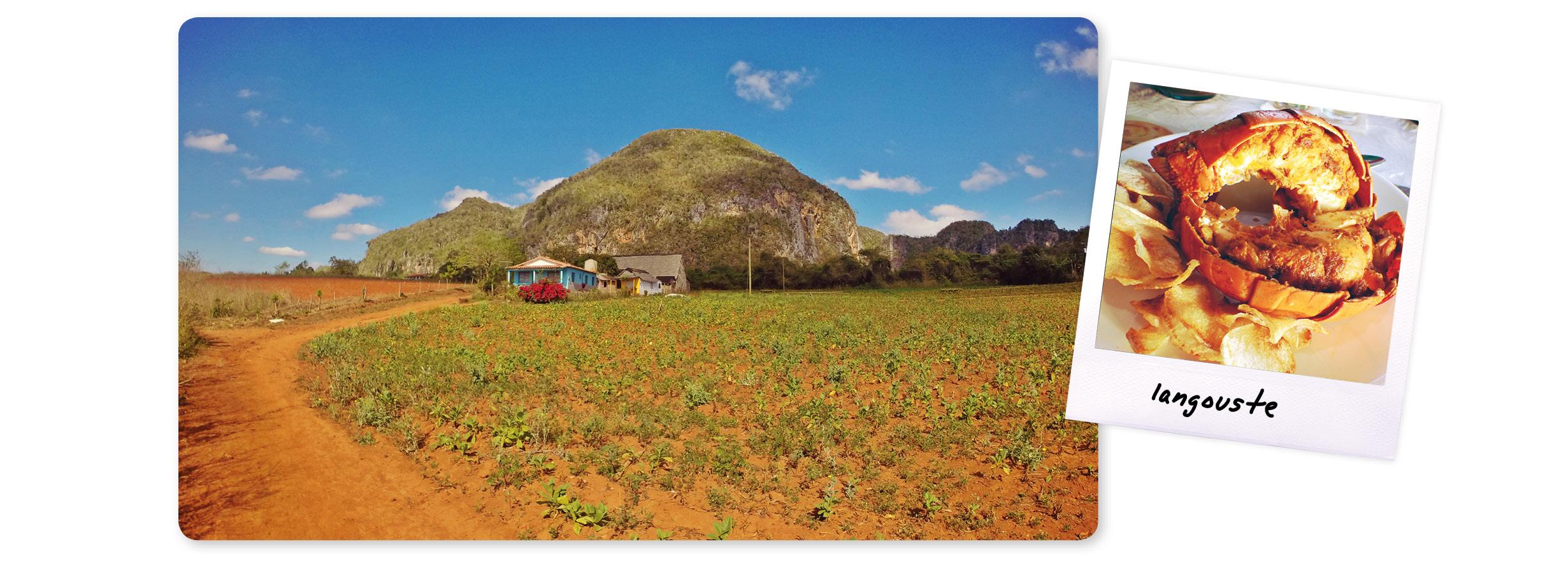 cuba, caraïbes, voyage, île, vinales, vallée, mogote, tabac, plantation, nature, langouste, cuba food,