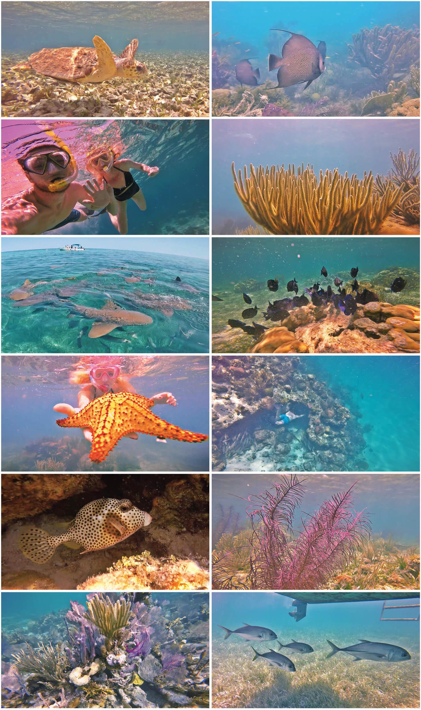 belize, coraux, snorkeling, hol chan, poissons, tortue, etoile de mer, requins, raies, corail, voyage