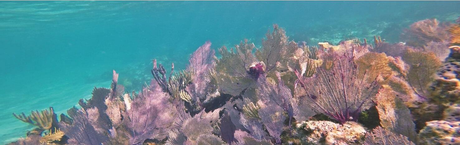 belize, coraux, snorkeling, hol chan, poissons