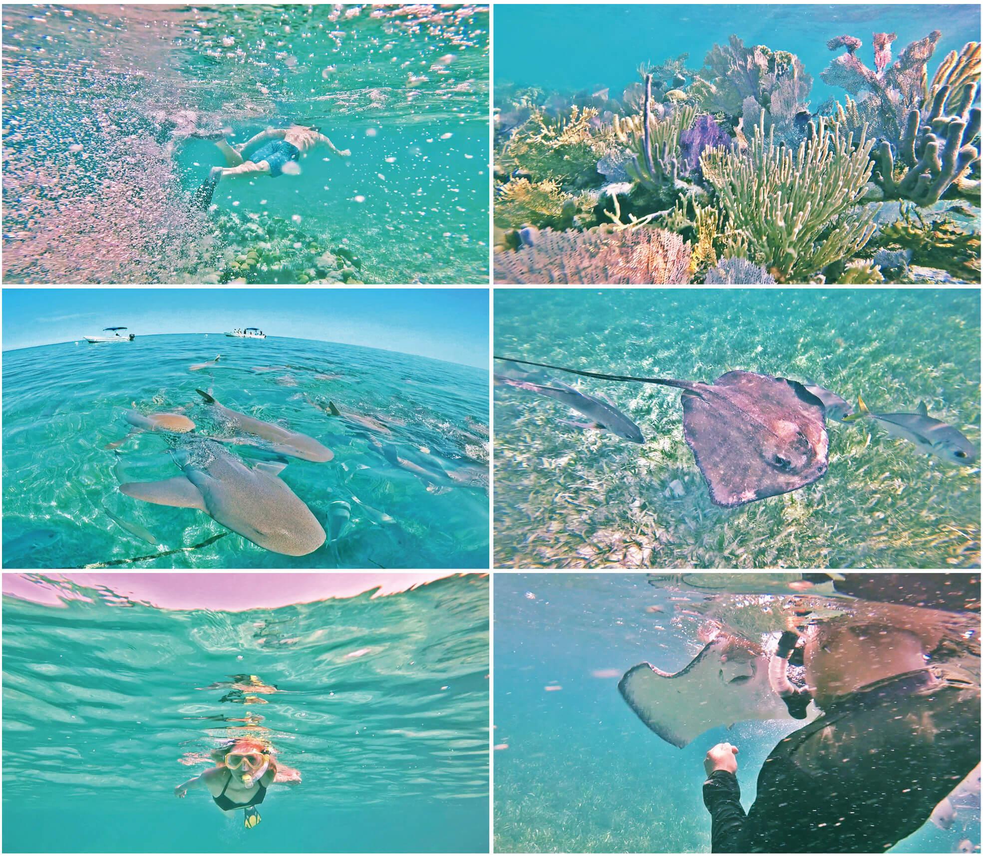 belize, voyage, caraïbes, requin, snorkeling, raies, mer, bateau, caye caulker, gopro, cocotier, corail