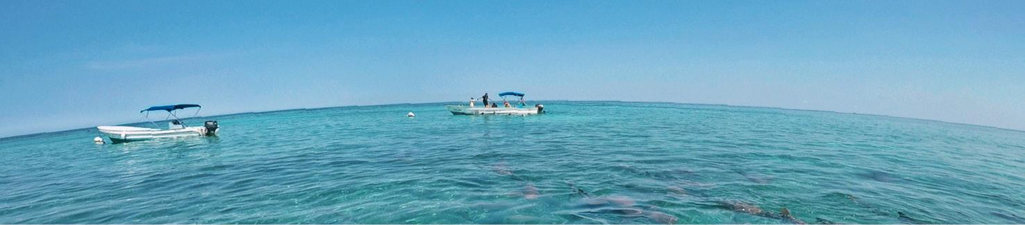 belize, voyage, mer, bateau, snorkeling, poissons