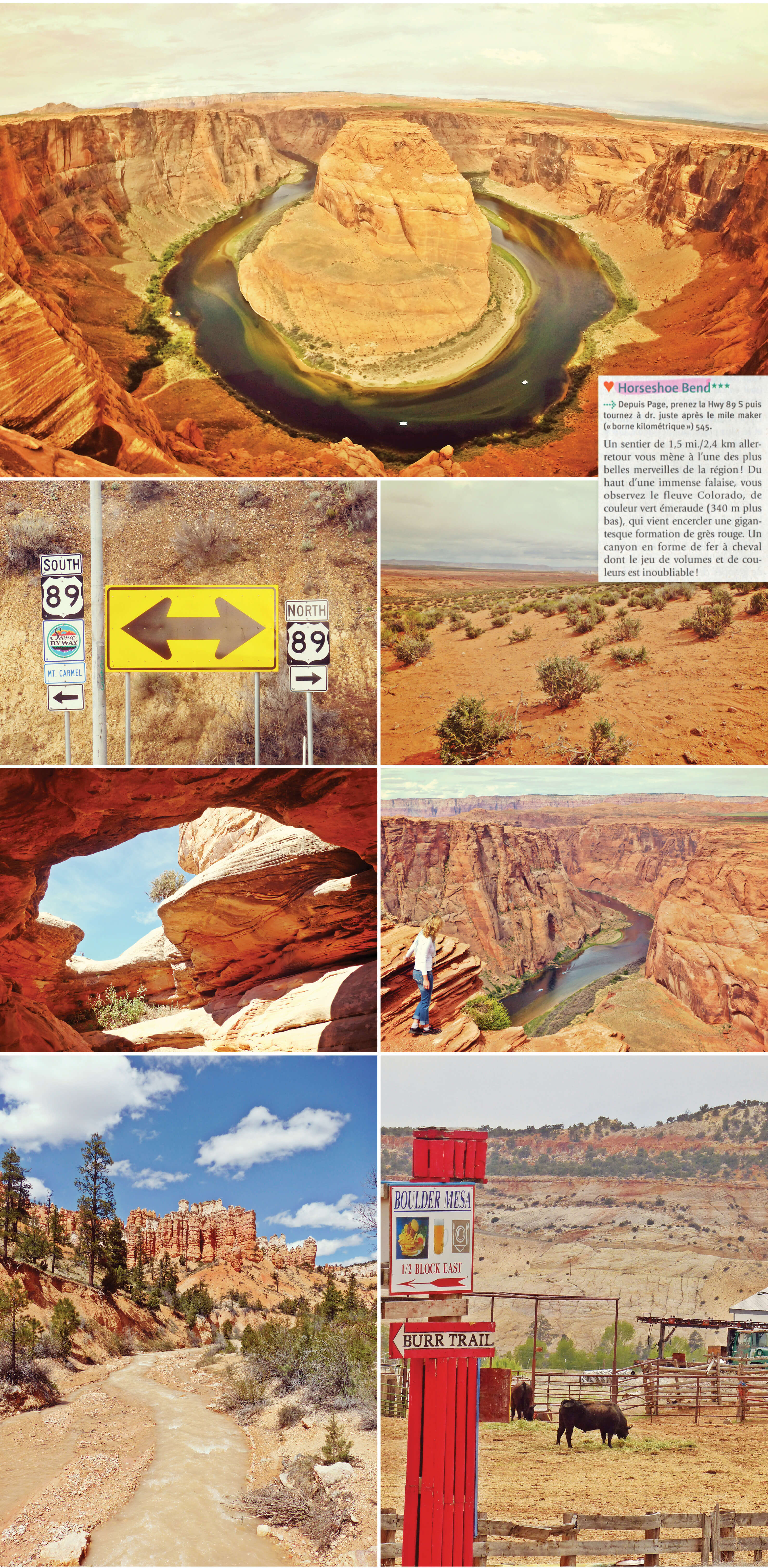 usa, utah, road trip, horseshoe bend, canyon, vache, route, voyage, désert