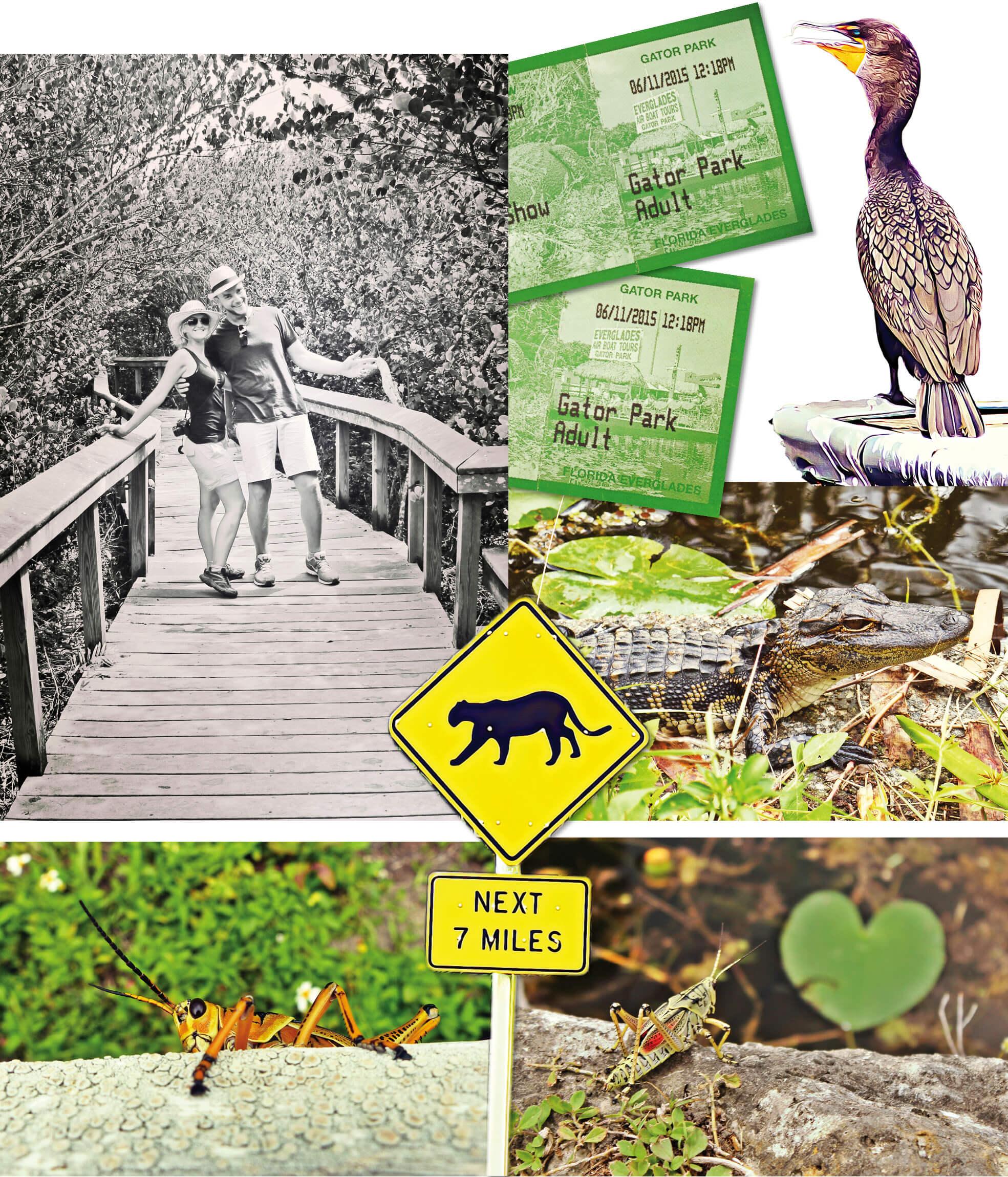 usa, voyage, Floride, Miami, everglades, crocodiles, crickets, serpents, sunshine state, road trip,