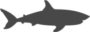 shark, requin, danger, bouledogue, tigre, squale, requin blanc, animal
